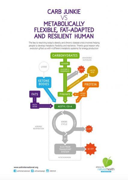 metabolicflex